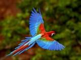 Afrika Papağanı Yapbozu
