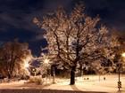 Ağaç ve Işıklar Yapbozu