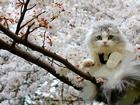 Ağaçtaki Beyaz Kedi Yapbozu
