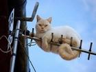 Antendeki Kedi Yapbozu