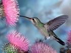 Arı Kuşu Yapbozu