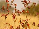 Arı Kuşugiller Yapbozu