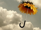 Ayçiçeği Şemsiyesi