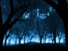 Ayışığı Altında Orman