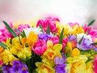 Bahar Çiçekleri Yapbozu