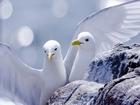 Beyaz Deniz Kuşları