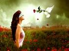 Beyaz Güvercin ve Kırmızı Gül Yapbozu