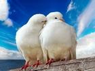 Beyaz Güvercinler Yapbozu