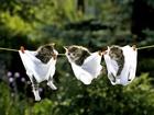 Çamaşır İpinde Üç Kedi Yavrusu