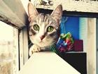 Çerçevedeki Kedi Yapbozu