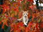 Daldaki Kedi