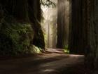 Dev Ağaçlar ile Kaplı Yol