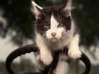 Direksiyon Başındaki Kedi Yapbozu