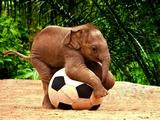 Futbolcu Fil Yapbozu