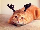 Geyik Şapkalı Kedi Yapboz