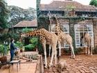 Giraffe Manor-Kenya Yapbozu