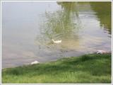 Gölbahçe Ördek Yapbozu