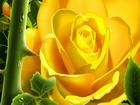 Göz Alıcı Sarı Gül