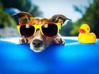 Gözlüklü Köpek Yapbozu