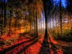 Gündoğumu ve Ağaçlar