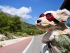 Güneş Gözlüğü Takmış Köpek Yapbozu