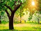 Güneşli Bir Bahar Günü