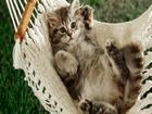 Hamaktaki Kedi Yapbozu