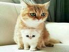 Hangi Kedi Daha Güzel Yapbozu