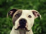 Harika Köpek Yapbozu