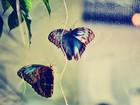 İki Kelebek Yapbozu