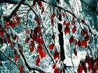 Kar Altındaki Kırmızı Yapraklı Ağaç Yapbozu