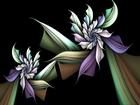 Karanlık Orkide Yapbozu
