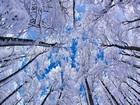 Karlı Ağaç ve Mavi Gökyüzü Yapbozu