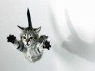 Kedi Atlayışı