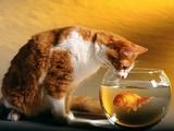 Kedi ve Balık Yapbozu