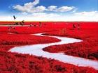 Kırmızı Sahil-Panjin-Çin