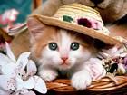Komik Kedi Yapboz