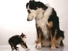 Köpeğe Kafa Tutan Kedi Yapbozu