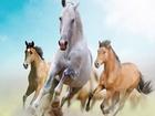 Koşan Atlar