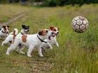 Koşuşturan Köpekler Yapbozu