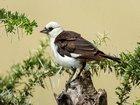 Kurumuş Ağaçtaki Kuş