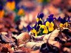 Kurumuş Yapraklar ve Renkli Çiçekler