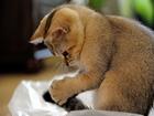 Kuyruğunu Tanımayan Kedi Yapbozu
