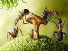 Mantar ve Karıncalar