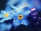Mavi Bir Çiçek Yapbozu