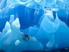 Mavi Buzdağı-Scotia Denizi Yapbozu