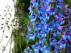 Mavi Çiçekler Yapbozu