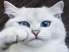Mavi Gözlü Güzellik