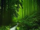 Mistik Yeşil Orman Yapbozu