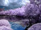 Muhteşem Bahar Manzarası Yapbozu